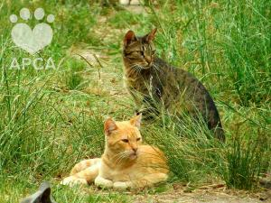 "<a href=""https://www.facebook.com/apcauy/"" target=""_blank""><img src=""http://www.tapitasoportunidades.com/blog/wp-content/uploads/2017/12/social-facebook-box-blue-icon.png"" alt=""Facebook"">APCA - Protección y Cuidado de Animales - Sauce, Canelones</a>"
