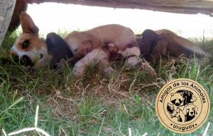 "<a href=""https://www.facebook.com/AmigosDeLosAnimalesUY/"" target=""_blank""><img src=""http://www.tapitasoportunidades.com/blog/wp-content/uploads/2017/12/social-facebook-box-blue-icon.png"" alt=""Facebook"">Protectora Amigos de los Animales - Paysandú</a>"